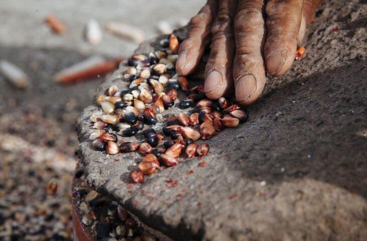 Misiones ya tiene Ley de Protección de Semillas Nativas y Criollas: En defensa de la vida, la historia y la cultura