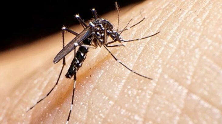Ya está lista la vacuna contra el dengue: qué eficacia tiene y cuándo podría empezar a aplicarse en el país