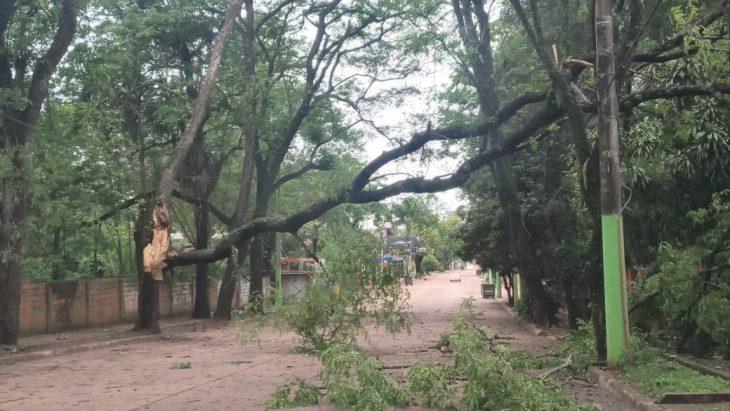 Bomberos de Iguazú realizaron varias intervenciones por la tormenta